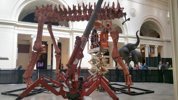The largest dinosaur in existence now stands at the Field Museum. Spydercrane helped make it happen.